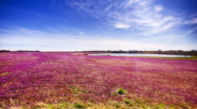 Enjoy The USA! 7 Ideas For A Spring Trip